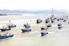 Fish stocks in East Sea fall sharply